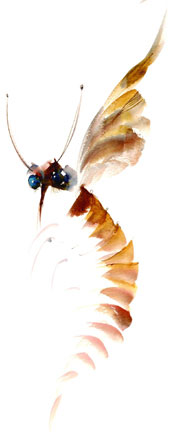 Anne Bachelier Alice: Looking Glass Insects